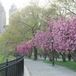 Aprile a New York