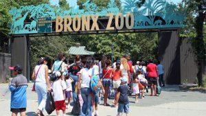 bronx zoo per famiglie e bambini