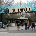 Bronx Zoo a New York