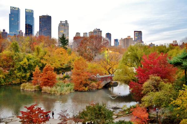 Foliage a Central Park