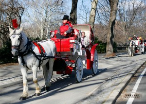 giro a central park in carrozza
