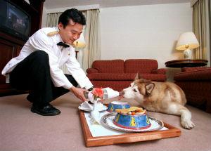 Hotel di lusso per cani a New York