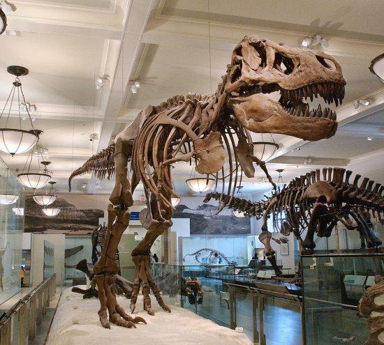 Museo dinosauri, New York