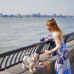 Andare a New York con il cane