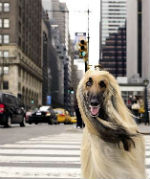 A New York con il cane