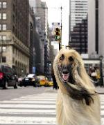 A New York con il cane