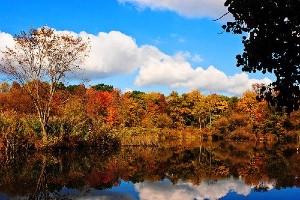 Foliage al Van Cortlandt Park