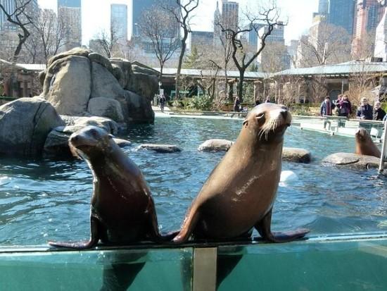 Animali dello Zoo di Central Park